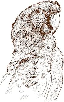 Pointillisme tekening van ara