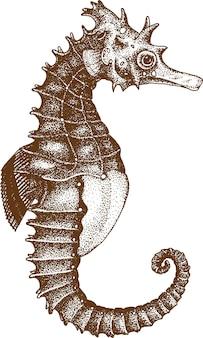 Pointillisme tekening van seahorse
