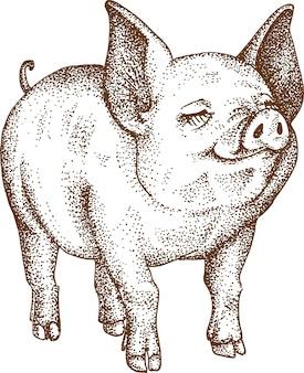 Pointillisme tekening van varken