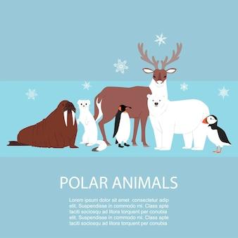 Polaire en arctische dieren en vogels illustratie.