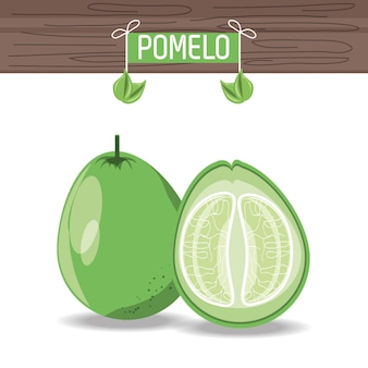 Pomelo fruit pictogram