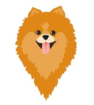 Pommeren spitz puppy spitz hondenras illustratie lachend gezicht van schattige pom puppy small