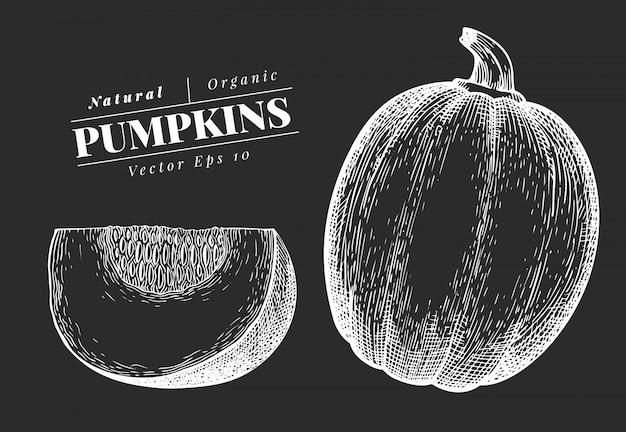 Pompoen illustratie. hand getekend plantaardige illustratie op schoolbord. gegraveerde stijl halloween of thanksgiving day symbool. vintage voedselillustratie.