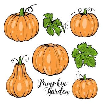 Pompoen ingesteld voor halloween met groene bladeren en typografie, hand getrokken schets