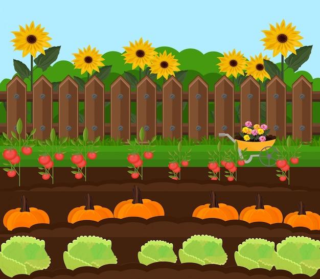Pompoen oogst tuin vector. plattelands achtergrondillustratie