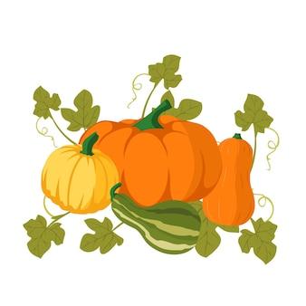 Pompoen van verschillende vormen en kleuren rijpe oranje pompoengroente