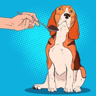Pop art beagle weigert te eten. droevige hond wil geen voedsel van mensenhand nemen.