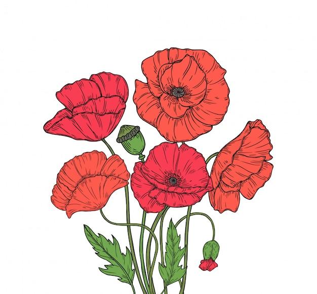 Poppy boeket. de rode de weidetuin van de papaversbloem bloeit de decoratieve knop die van de installatiepapaver bloemen anzac dagachtergrond planten