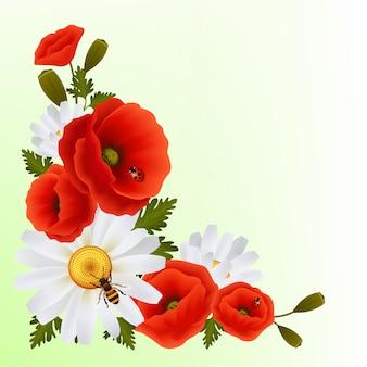 Poppy daisy achtergrond