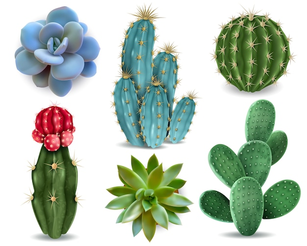Populaire kamerplanten elementen en vetplanten rozetten variëteiten inclusief pin kussen cactus realistische collectie geïsoleerde vector collectie