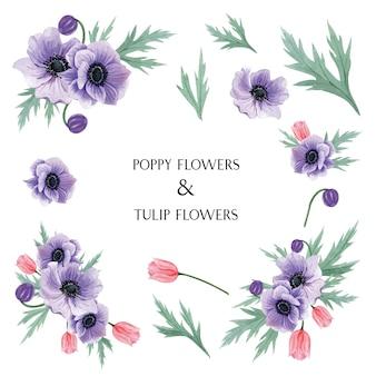 Popy en tulpen bloeit botanische de bloemenillustratie van waterverfboeketten