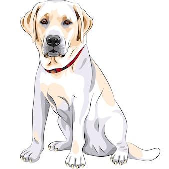 Portret van een close-up van ernstige gele hondenras labrador retriever zit