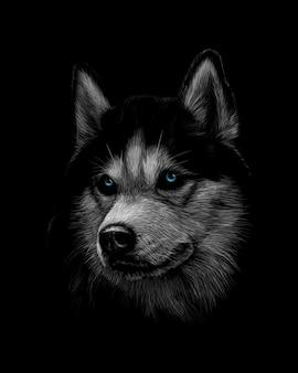 Portret van het hoofd van de siberische husky met blauwe ogen op een zwarte achtergrond. vector illustratie