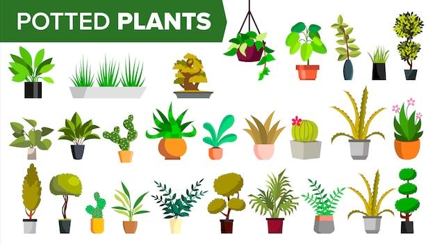 Potplanten