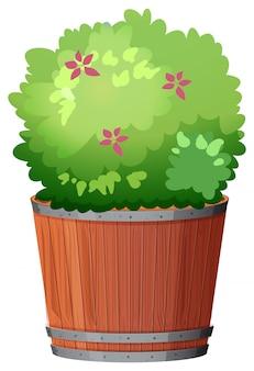 Potteninstallatie met groene bladeren op een geïsoleerd wit