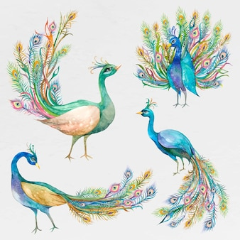 Prachtige aquarel pauw set