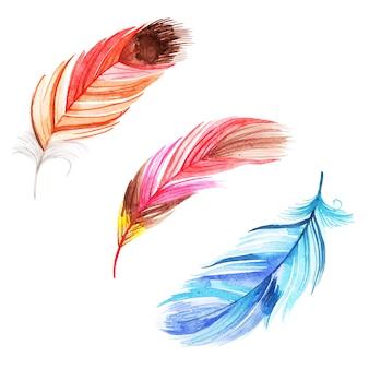 Prachtige aquarel veren collectie
