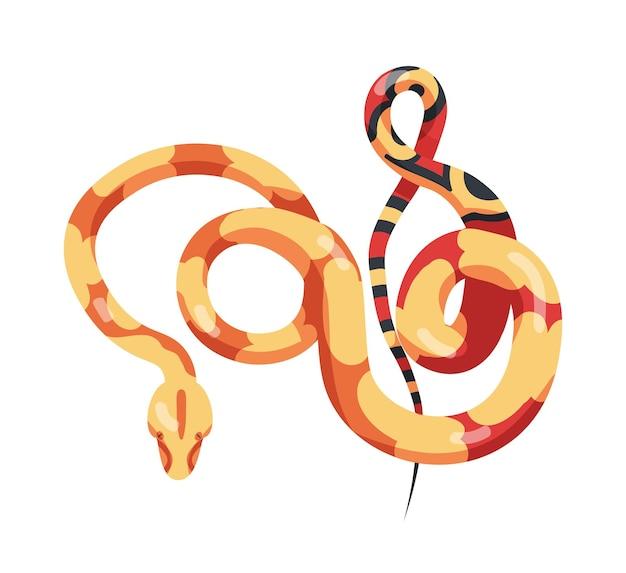 Prachtige bochtige slang geïsoleerd op een witte achtergrond. exotisch vleesetend reptiel, giftig roofdier, wilde woestijn of tropisch jungledier. kleurrijke vectorillustratie in platte cartoon stijl.