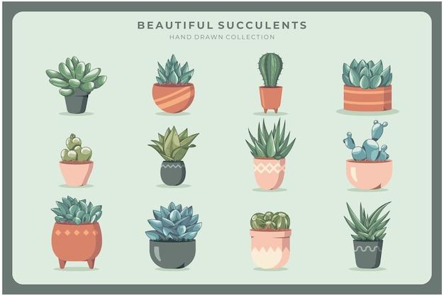 Prachtige collectie cactussen en succulenten