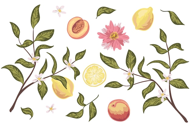 Prachtige illustraties set met perzik, citroen, bloemen en bladeren. kleurrijke hand getekende vector. perfect voor huwelijksuitnodigingen, wenskaarten, natuurlijke cosmetica, prints, posters, verpakking en thee