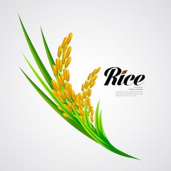 Premium rice ontwerp van hoge kwaliteit.