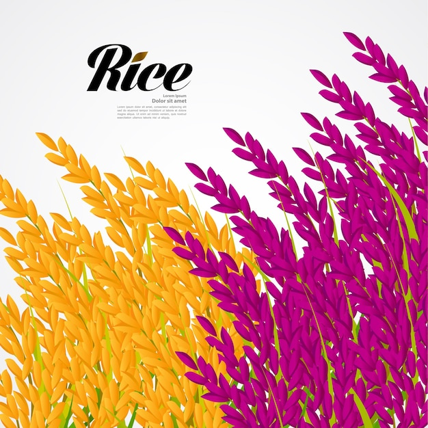 Premium rijst-ontwerp
