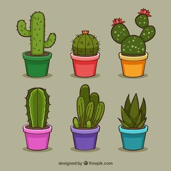 Pretpakket van kleurrijke cactus