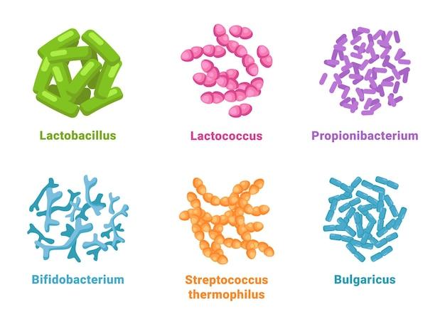 Probiotische set lactobacillus lactococcus propionibacterium bifidobacterium streptococcus