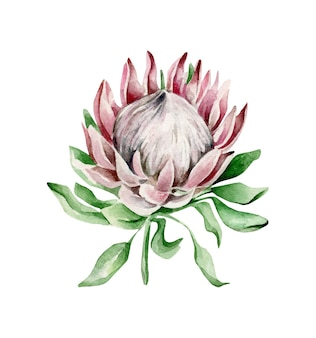 Protea bloem