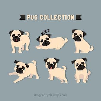 Pug collectie met klassieke stijl