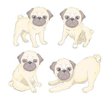 Pug puppy set