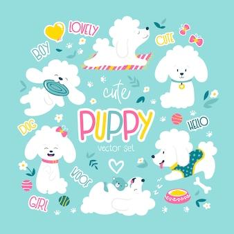 Pups ingesteld. grappige witte kleine poedelhonden in een dagelijkse routine.