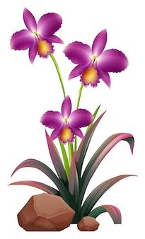 Purpere orchideebloemen en rotsen