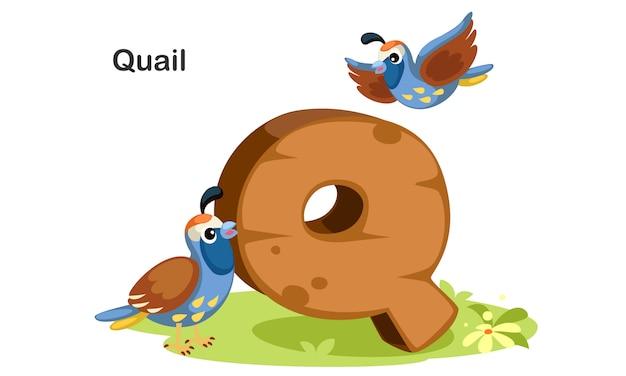 Q voor kwartel