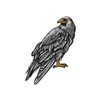 Raaf, kraaien vogel wild dier
