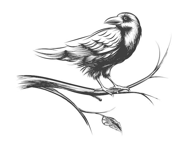 Raaf of zwarte kraai schetsen en silhouetten. dierlijke vogel op de illustratie van de takboom