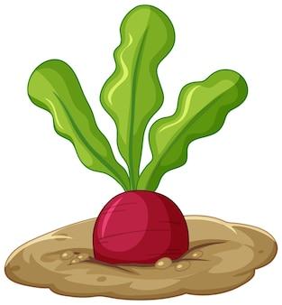 Radijs wortel in bodem cartoon stijl geïsoleerd