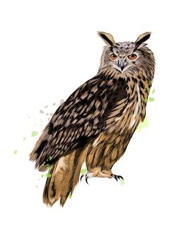 Ransuil, oehoe uit een scheutje aquarel, gekleurde tekening, realistisch.