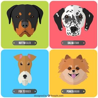 Rassen van honden