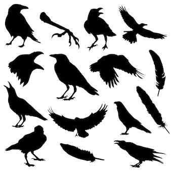 Raven bird halloween silhouet illustraties