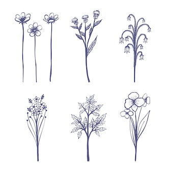 Realistisch tekenen met kruiden en wilde bloemen