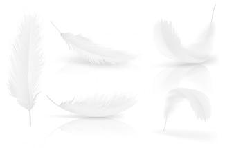 Realistische 3d witte vogel, engel veren set
