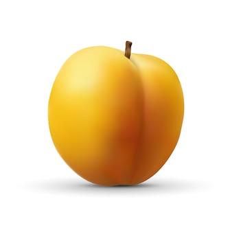 Realistische abrikoos geïsoleerd op wit