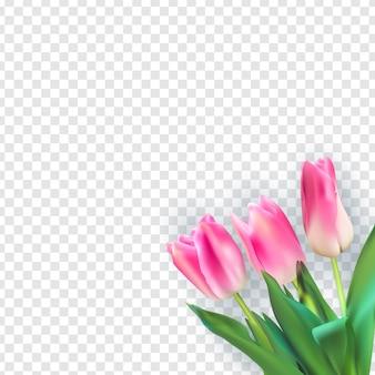 Realistische afbeelding kleurrijke tulpen op transparante achtergrond