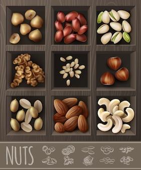 Realistische biologische notencollectie met walnoot, pinda, amandel, hazelnoot, kastanje, pistache, cashewnoten, paranoten