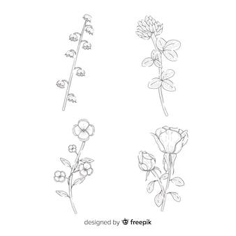 Realistische bloemen collectie tekening