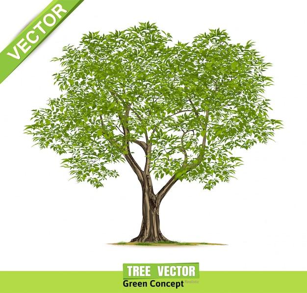 Realistische bomen geïsoleerd