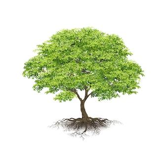 Realistische bomen op witte achtergrond