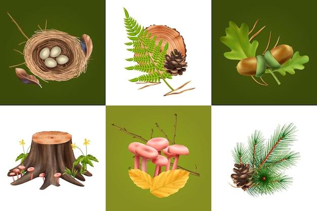 Realistische botanische ontwerpconcept illustratie