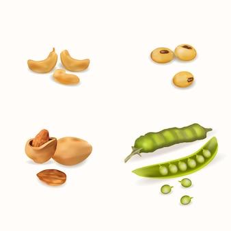 Realistische cashewnoten, erwten, amandelen en sojabonen
